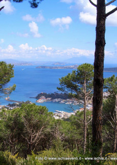 Wood of La Maddalena - Fiaiano: the path of the pine forests