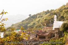 Santa-Maria_Monte-1136