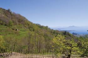 Tenuta_del_cannavale_ischia