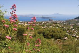 Panorama_sul_golfo_dalla_tenuta_del_cannavale
